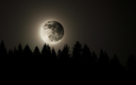 full moon - forest, moon, night, full