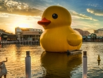 giant yellow duck in the harbor hdr