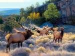 Always Alert - Elk
