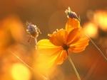 Floral Ending
