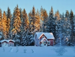 lovely home in wintry forest
