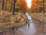 Symond's Creek