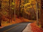road in a beautiful autumn forest