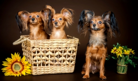 Cute puppies - beautiful, adorable, sweet, cute, puppies, sunflowers, basket, flowers, dog