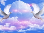 ~*~ Doves Peace ~*~