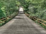 wonderful hanging bridge in the jungle hdr