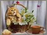 Cat,morning