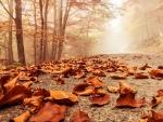 mystic fall road