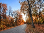 road through a colorful forest in autumn hdr