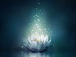 Magical lotus