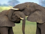 Elephant cuddle