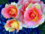 Beauty roses for Nexus driends
