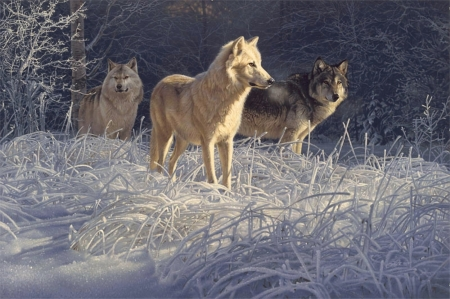 'On the hunt'..... - wolf pack, wolves, animals, wild
