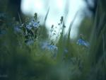 Spring Little Flowers