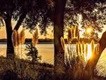 White Rock Lake / Sunset