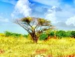 savanna innamibia