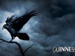 Raven in the dark