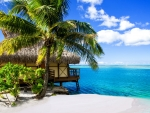 thatched hut on a tropical beach