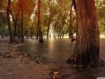 marsh in autumn