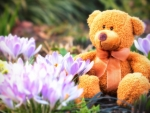 Teddy Bear in Spring