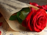 Red Rose in Music Notes