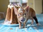 Its my cake