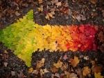 Autumn arrow