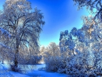 mesmerizing winter scene hdr