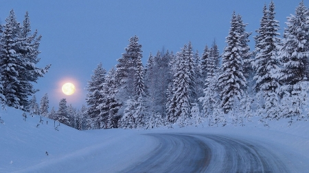 moon in winter - moon, trees, road, winter