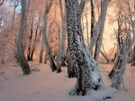 magical forest in winter