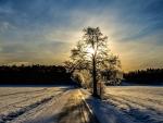 winter landscape at sundown