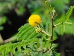 Indian flower II.