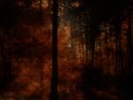 Sunset Fall Woods