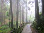 forest trail to suspension bridge