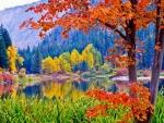 multicolored autumn nature scene