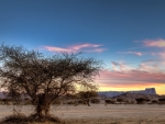 lone tree on the savanna