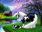 Sweet Little Foal