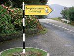 Leprechaun Crossing