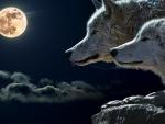 Favorite wolfs
