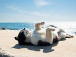 Time for Sunbath