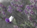 Butterfly on Flowers