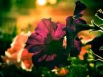 Blacklit flowers