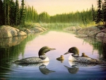 North Country Loons