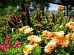 garden,blossoms,petals,plants,
