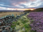 Sunset on Scottish Heather