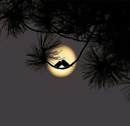 A Kiss For Goodnight Other Nature Background Wallpapers On