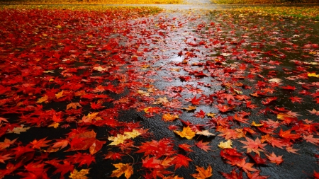 Fall - autumn, nature, leaves, wet