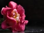 Interesting Camellia F