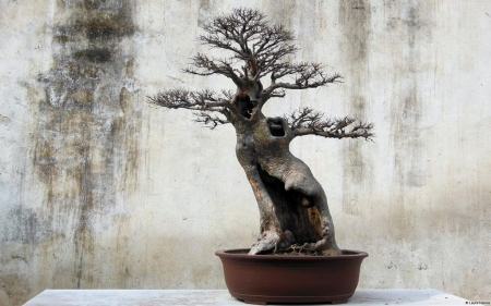 Bonsai - bonsai, tree, photography, Japan, zen, wallpaper, abstract