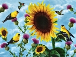 Sunflowers and Songbirds f